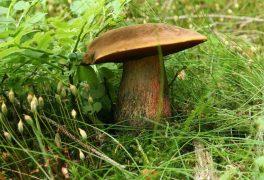 Den hub se nekoná, houby nerostou
