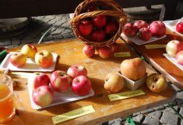 Dny plné jablek