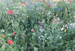 Přírodní zahrada – povídání o zahradničení