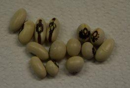 Nová nabídka v semínkovně