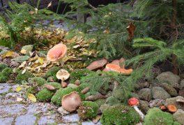 Podzimní výstava Chaloupek – fotky