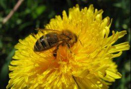 Vůně medu po dvacáté